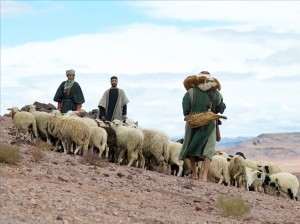 Shepherds and their sheep