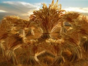 Joseph king-of-grains dream